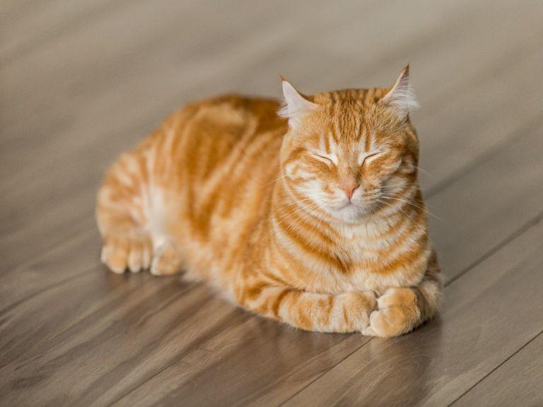 chọn sàn gỗ dành cho gia đình nuôi thú cưng
