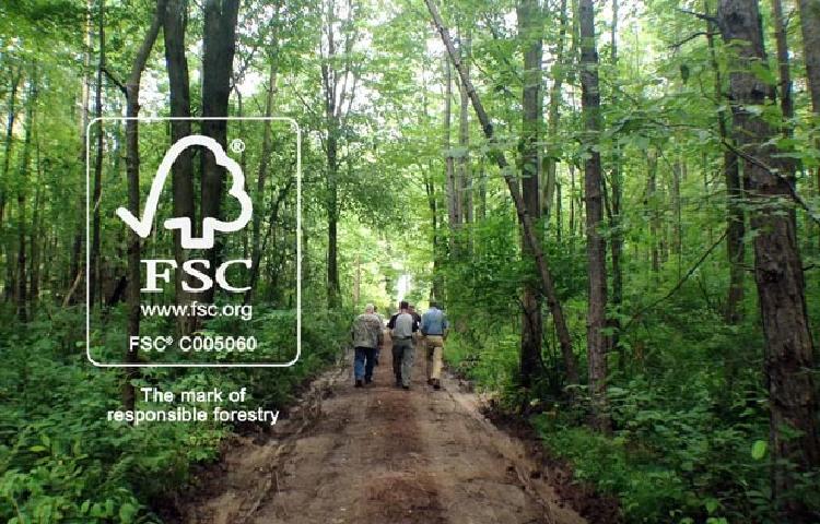 FSC đề xuất các giải pháp nhằm kiểm soát nguồn tài nguyên rừng.