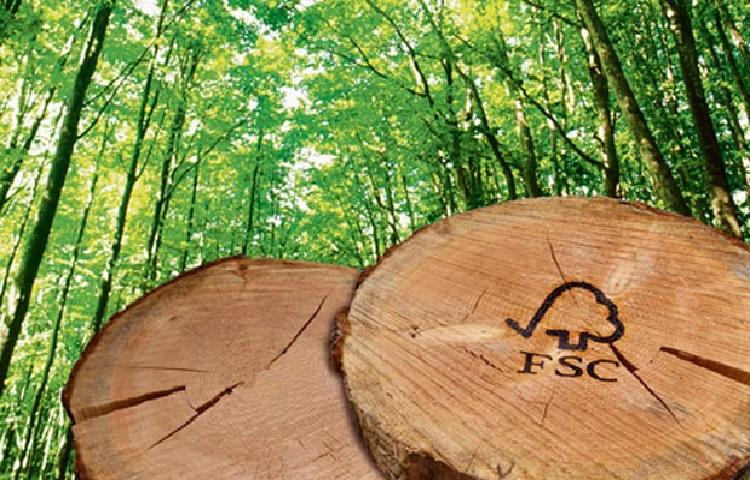 Chứng chỉ FSC mang lại nhiều lợi ích cho xã hội, doanh nghiệp và môi trường